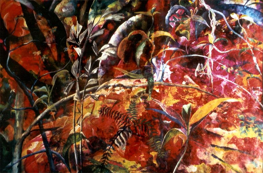 Das stille Feuer des Waldes - Rani B. Knobel