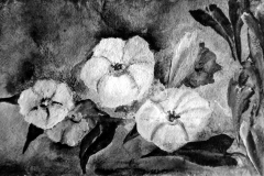 Ackerwinde - Rani B.Knobel
