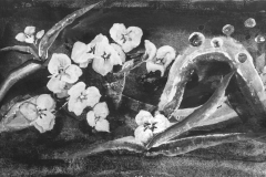 Frühlingsblüten - Colochortus - Rani B. Knobel